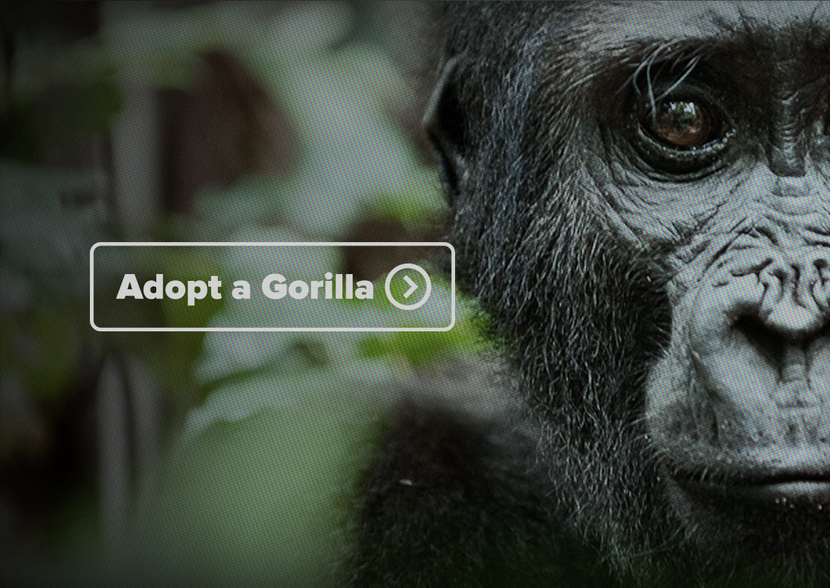 Fuse Design Ltd - FuseDesign-GorillaOrg-Web-Design-London